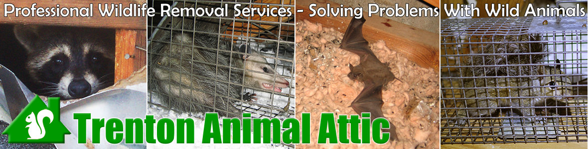 Hamilton Township Animal Attic